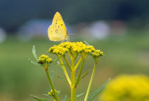 Butterfly pollinating a flower by Panoramic Images