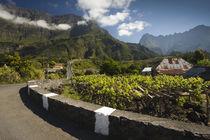 Vineyard at the roadside, Ilet a Cordes, Cirque de Cilaos, Reunion Island von Panoramic Images