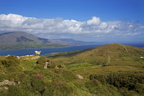 Mountain Ridge on Bear Island, Beara Peninsula, County Cork, Ireland by Panoramic Images