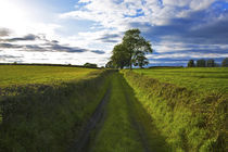 Boreen Though Fields, Near Kells, County Kilkenny, Ireland by Panoramic Images