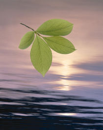 Green leaves hovering above shimmering dark blue water with light through clouds by Panoramic Images