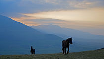 Horses on Croaghaun, With Comeragh Mountains, County waterford, Ireland by Panoramic Images