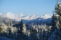 Heavy snow on pine tree forest, Chugach Mountains, Alaska, USA. von Panoramic Images