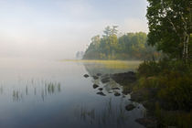 Shoreline trees and grasses along Nina Moose Lake by Panoramic Images