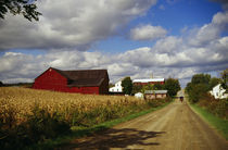 Amish farm buildings and corn field along country road, Ohio, USA. von Panoramic Images