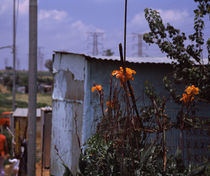 Flowers with huts in a town, Kibera, Nairobi, Kenya von Panoramic Images