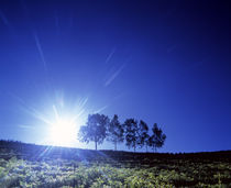 Silhouette with trees in sparse field back lit by white sun von Panoramic Images