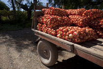 Sack of onions on a cart von Panoramic Images