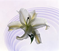 White orchid floating in crystal bowl von Panoramic Images