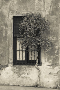 Tree in front of the window of a house by Panoramic Images