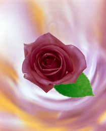 Close up of red rose with green leaf floating in front of swirling pinks by Panoramic Images