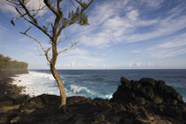 Tree on the beach, Le Souffleur d'Arbonne, Le Baril, Reunion Island von Panoramic Images