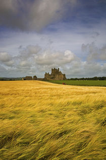 Cistercian Dunbrody Abbey (1182) beyond Barley Field, County Wexford, Ireland von Panoramic Images