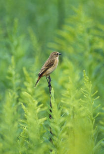 Bird perching on a twig von Panoramic Images