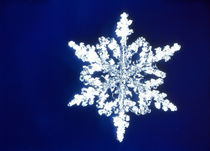 Snowflake by Panoramic Images