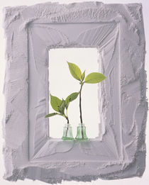 White plaster frame with two green glass bottle tops holding green sprouts by Panoramic Images