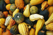 Variety of gourds, close up. by Panoramic Images