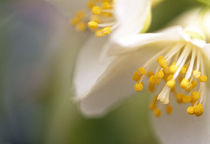 Close-up of flowers von Panoramic Images