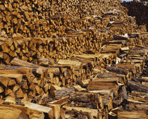 Heap of firewood, Chicago, Illinois, USA von Panoramic Images