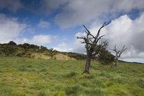 Trees on a landscape, Bourg Murat, Plaine des Cafres, Reunion Island von Panoramic Images