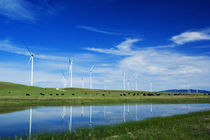 Herd of cattle grazing beneath row of wind farm turbines by Panoramic Images