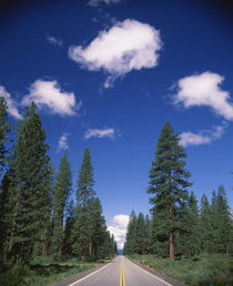 Trees along a road, Shasta County, California, USA by Panoramic Images