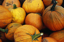 Pile of harvested pumpkins, close up. von Panoramic Images