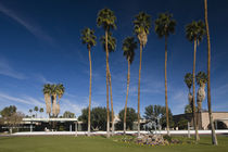 Palm trees in front of a government building by Panoramic Images