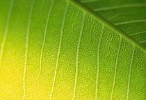 Close-up of a leaf von Panoramic Images