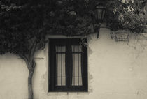 Tree in front of a house, Colonia Del Sacramento, Uruguay von Panoramic Images