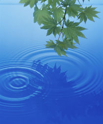 Branch with green leaves suspended over deep blue water  by Panoramic Images