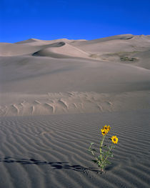 USA, Colorado, Great Sand Dunes National Monument von Panoramic Images