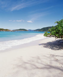 US Virgin Islands, St. John, Cinnamon Bay, Trees at the North Shore by Panoramic Images