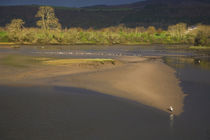 Common or Grey Heron by Panoramic Images