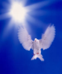 One dove with wings outstretched flying towards brilliant light in dark blue sky von Panoramic Images