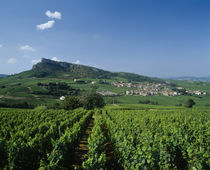 Vineyard on a landscape with a village in the background by Panoramic Images