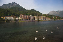 Swans in the lake with town in the background by Panoramic Images
