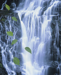 Green leaves cascading in front of waterfall by Panoramic Images