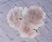 Three azalea blooms resting on white plaster background von Panoramic Images