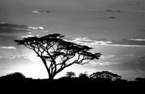 Silhouette of trees in a field by Panoramic Images