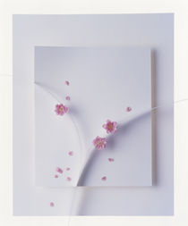 Tiny pink flowers scattered on white sculptured background von Panoramic Images