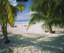 Palm trees on the beach, North Beach, Isla Mujeres, Quintana Roo, Mexico by Panoramic Images