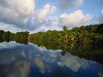 Forest along the riverbank and reflection of cloud in water, Sibun River, Belize von Panoramic Images