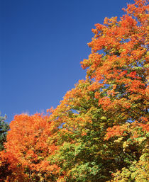 USA, New York, Letchworth State Park, Low angle view of fall trees von Panoramic Images