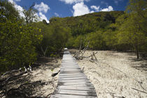 Boardwalk passing through a marsh, Curieuse Island, Seychelles by Panoramic Images