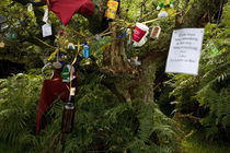 Personal Items on Prayer Tree, Comeragh Mountains, County Waterford, Ireland von Panoramic Images