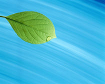 Single green leaf on streaked blue fabric by Panoramic Images