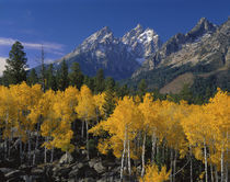 USA, Wyoming, Grand Teton National Park von Panoramic Images