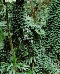 Dominica Nature Sanctuary Papillote Wilderness Retreat von Panoramic Images