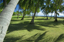 Palm Trees Growing Towards Coast by Panoramic Images